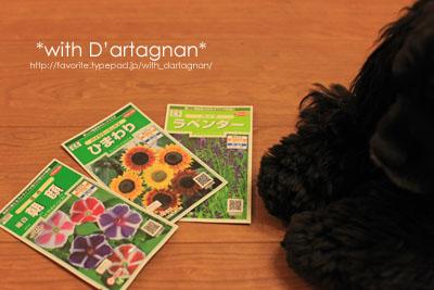 With D'artagnan